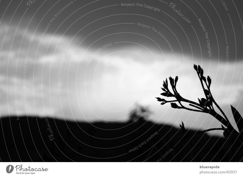 White Plant Black Clouds Dark Blossom Gray Background picture Thunder and lightning Diagonal Bud