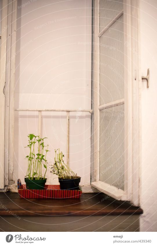 window seat Herbs and spices Organic produce Plant Foliage plant Wall (barrier) Wall (building) Window Natural Green Cress Colour photo Interior shot Deserted