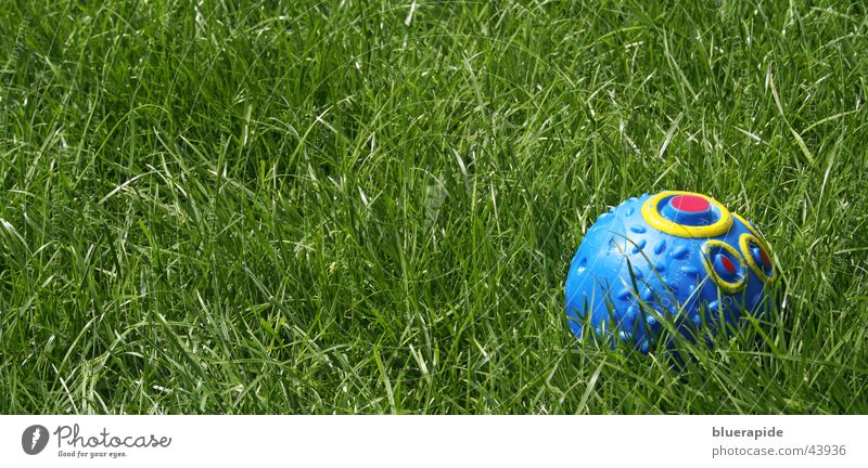 Green Blue Meadow Playing Grass Ball Leisure and hobbies Statue Dog toy