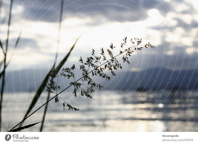 Water Clouds Lake Waves Hill Common Reed Blade of grass
