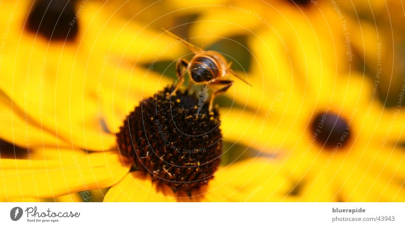 Bee from behind Hind quarters Flower Yellow Middle Blossom Wing Legs Seed Rear view