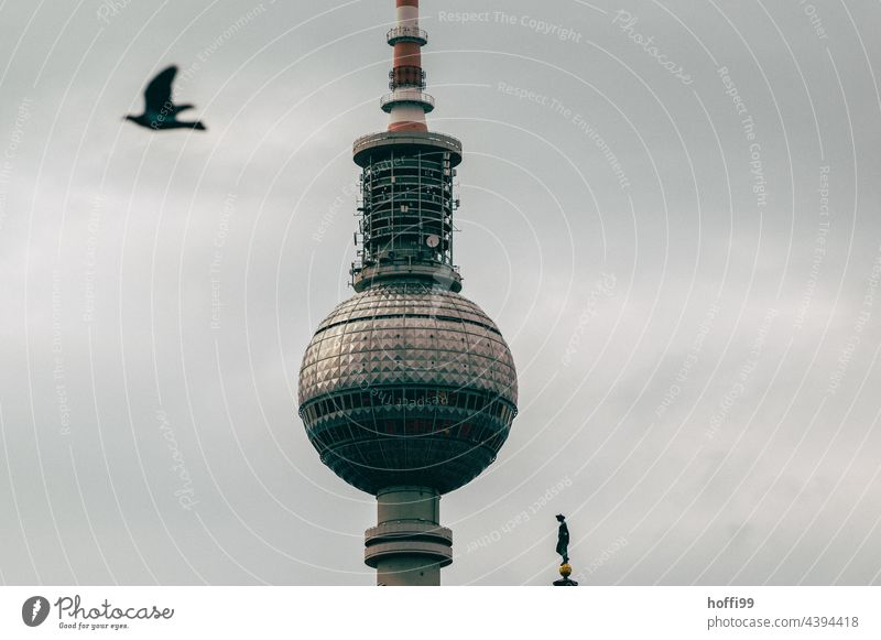 Berlin television tower with dove Berlin TV Tower Pigeon Landmark Capital city Monument Downtown Berlin Alexanderplatz Television tower Tourist Attraction