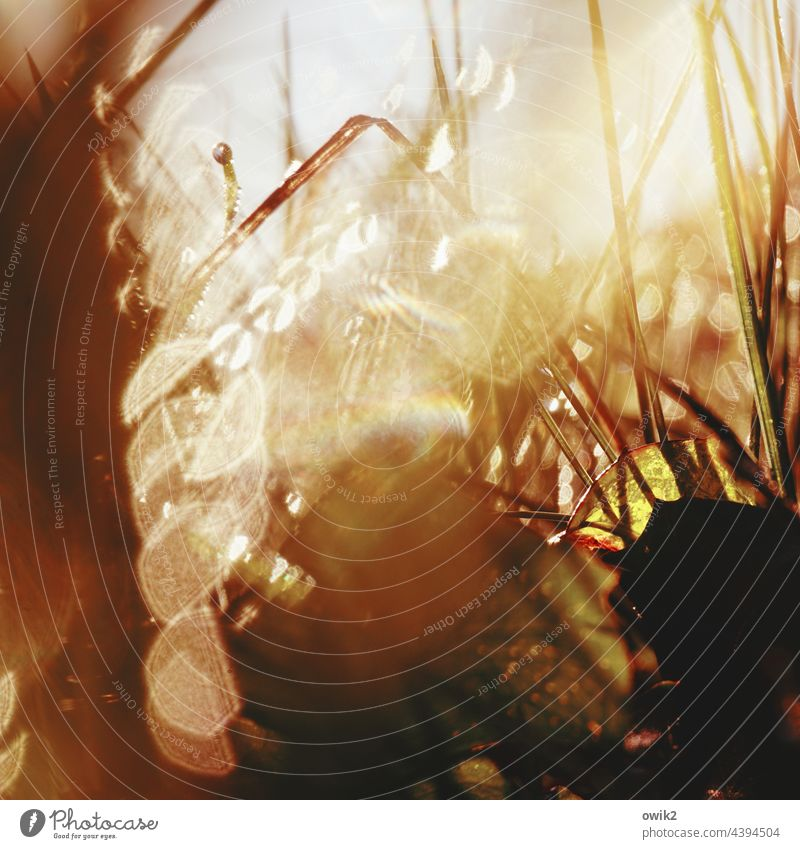 Stalks and drops Meadow Drops of water Illuminate Spring Glittering Beautiful weather Small Detail Colour photo whirr Copy Space top Blade of grass Deserted