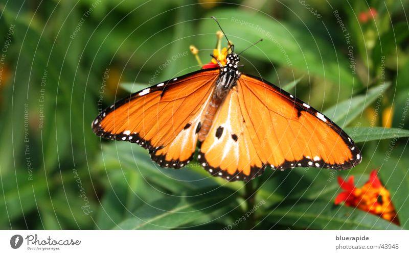 Green Plant Summer Leaf Black Orange Illuminate Wing Butterfly
