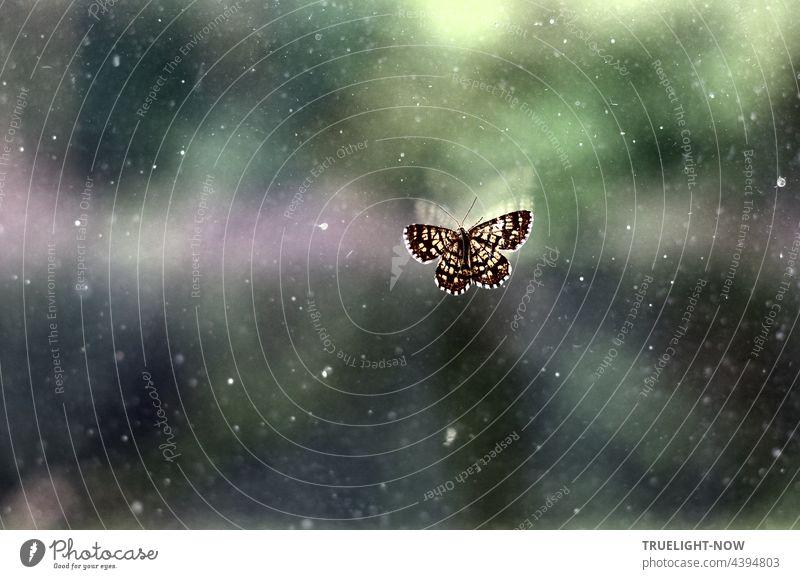 A little butterfly. He doesn't understand the window. I release it... butterflies Butterfly Small moths Lost Window pane Judder Captured penned search Helpless