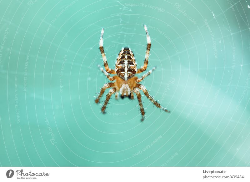 spider Animal Wild animal Insect Spider Crawl Wait Threat Cold Small Astute Turquoise Colour photo Exterior shot Close-up Detail Macro (Extreme close-up) Day