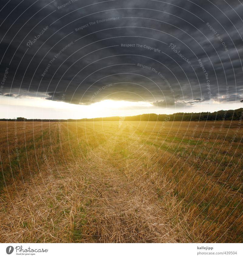 light on the horizon Environment Nature Landscape Clouds Storm clouds Sun Gale Field Yellow Gold Stubble field Horizon Grain field Brandenburg Tractor track