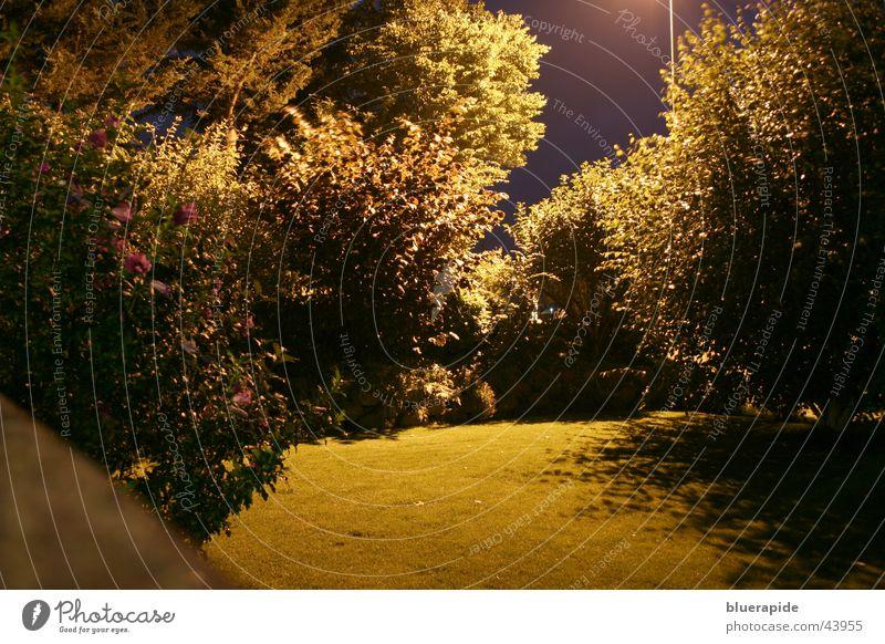 Sky Tree Colour Dark Grass Garden Wall (barrier) Glittering Gold Lawn Bushes Lantern Street lighting