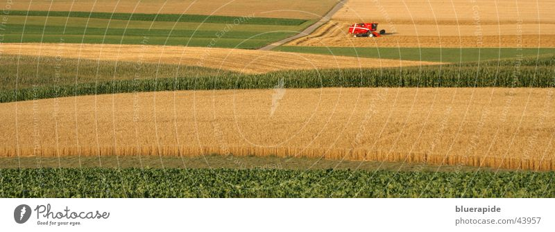 Green Red Plant Summer Yellow Gold Field Agriculture Grain Harvest Wheat Cornfield Wheatfield Reap Golden yellow