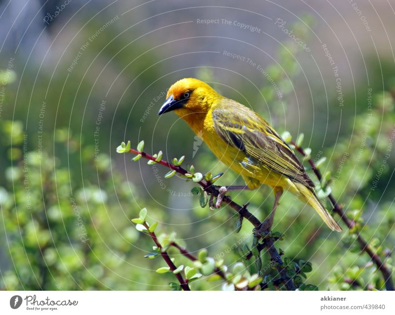 Nature Green Plant Animal Yellow Environment Natural Bird Wild animal Bushes Feather Wing