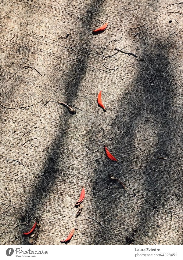 Leaves on the ground and the shadows Tree leaves Autumn Autumn leaves Autumnal colours Leaf Autumnal weather autumn mood Early fall Environment Nature nature