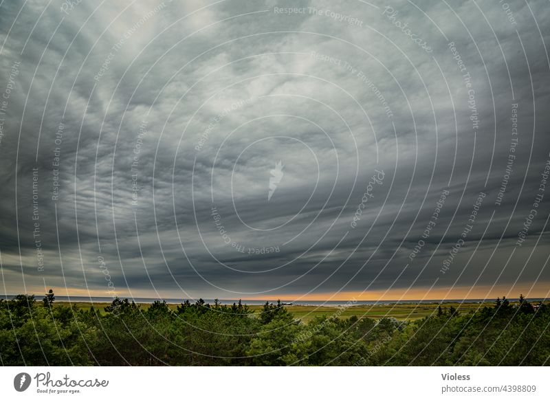 What's in store for us? Saint Peter Ording North Sea Clouds Weather Tree tops wide Comfortless Storm