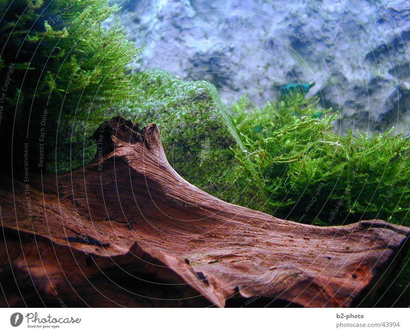 Water Plant Wood Stone Warmth Landscape Empty Fish Physics Aquarium Root Algae
