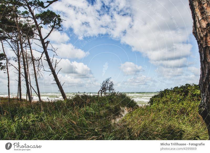 West Beach Fischland - Darß Darss Fischland-Darss-Zingst Western Beach Baltic Sea coast Waves Water Ocean Sand trees Forest Sky Clouds Wind Sun Nature Landscape