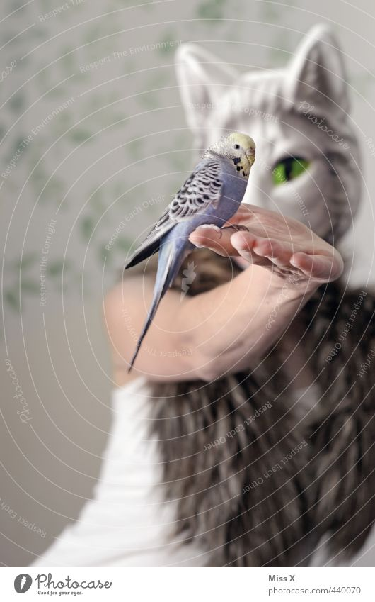 Cat Human being Hand Animal Bird Pelt Mask Pet To feed Feed Cat eyes Cat's head Budgerigar Devour