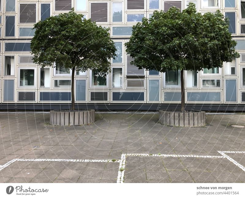 city stories Town Tree Cologne Building Architecture Parking spaces Room Street Geometry dreariness accurate Exterior shot Manmade structures Window