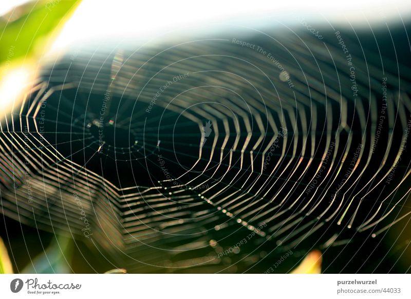 spider's web Spider's web Sunrise Rope Macro (Extreme close-up)