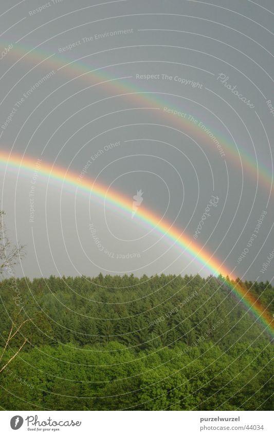 Forest Rain Rainbow