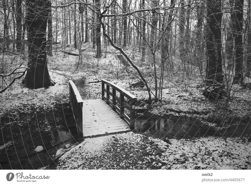 temporary solution Bridge Brook Winter Landscape Nature Environment Bushes Park Water Tree Idyll Shadow rail tranquillity Mysterious Water reflection Forearm