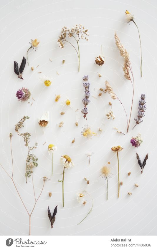 Flatlay of almost dried flowers and grasses flatlay blossoms Dried dried plant Plant Nature Summer Wild plant naturally wild flowers Dry Dried flower