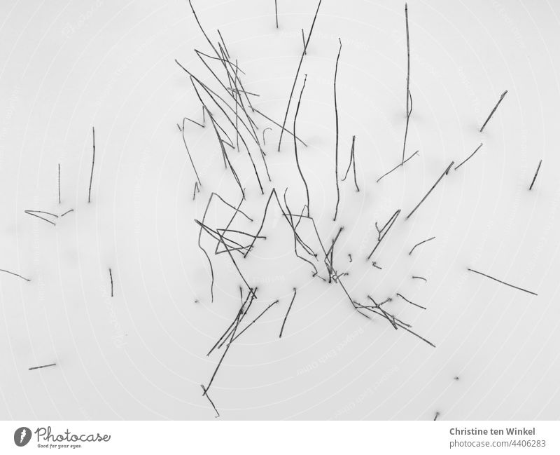 A closed blanket of snow from which the withered stems of a plant peep out Snow Snow layer Plant Part of the plant Stalk stalk Plant stems Plant Stems Winter