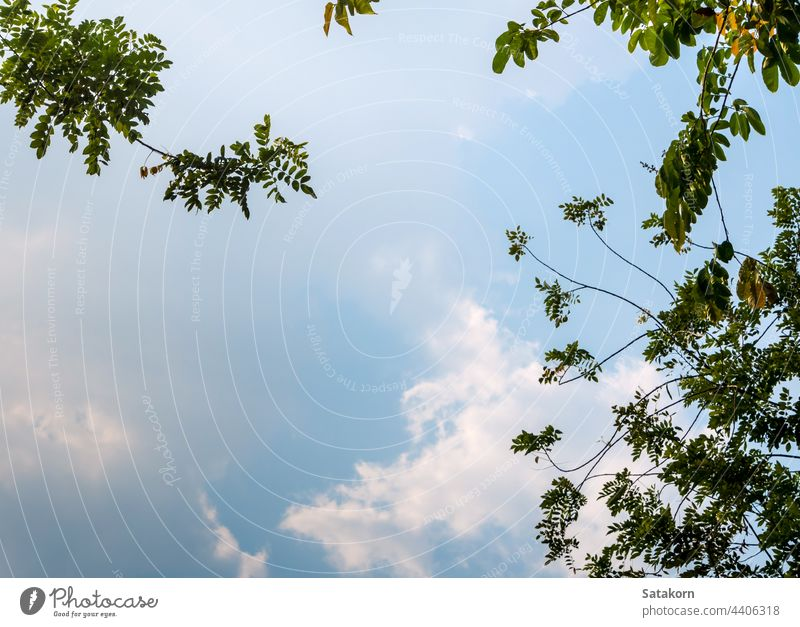 A Low Vantage Point to the leaves of tree , Looking up to the sky through light sun forest green branches nature sunlight background wood color park summer