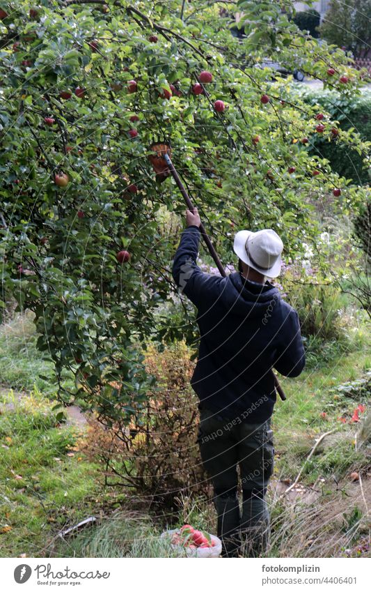young man with hat picking apples Apple harvest reap Apple tree Man Human being Organic produce Harvest Tree Autumn Fresh Garden Healthy Food fruit Fruit trees