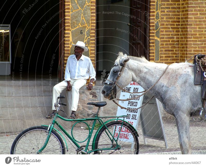 Vila Amoreiras Brazil Horse Bicycle Man Senior citizen Calm Serene Break Relaxation South America Human being Male senior Equestrian sports Sit Stairs Street