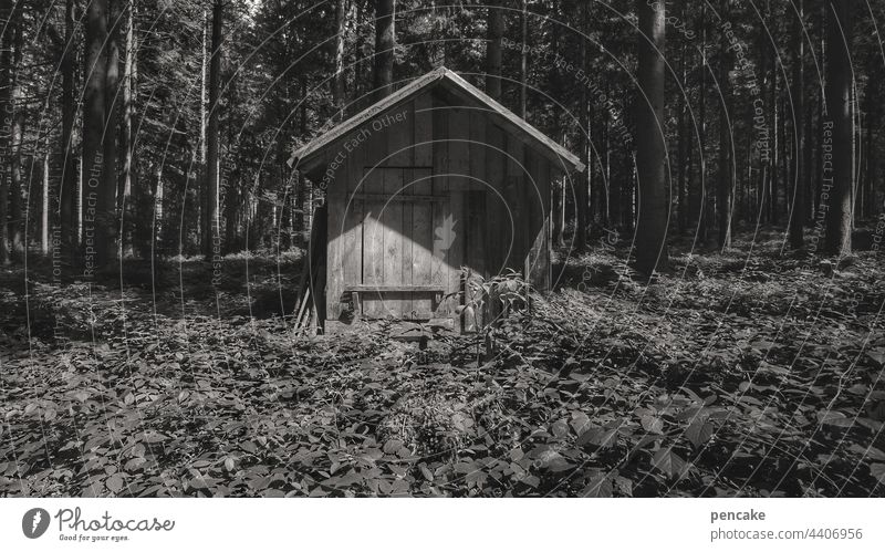 occupied   or free? Forest Hut Wooden hut black-white Loneliness House (Residential Structure) Deserted Nature Wooden house Log home Architecture Exterior shot