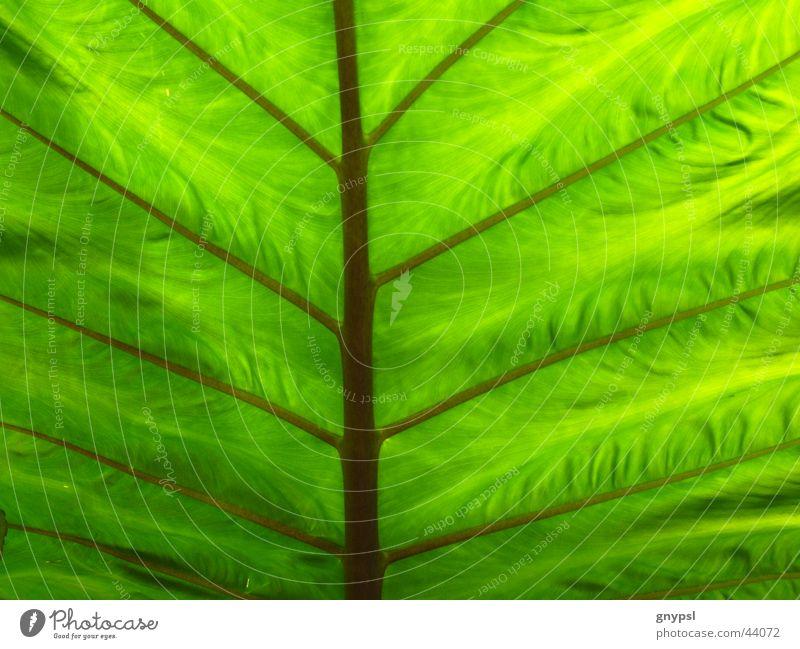 Green Plant Leaf Branchage Translucent