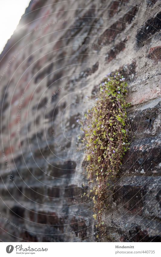 Nature Green Plant Red Flower Leaf Environment Wall (building) Wall (barrier) Gray Blossom Stone Growth Stand Tall Roof