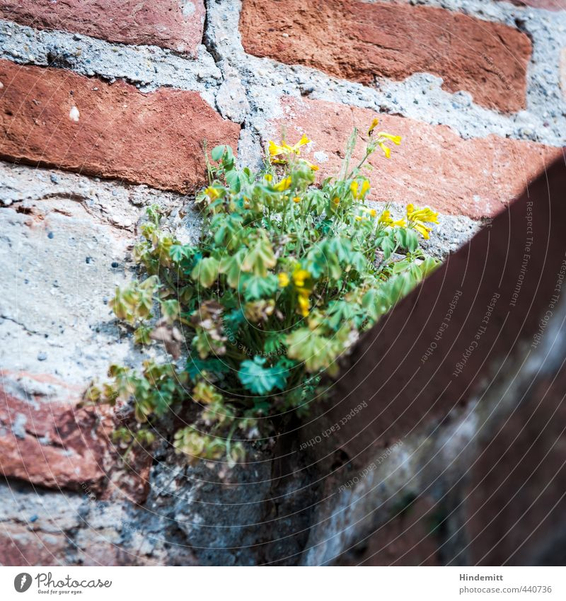 Wallflower I Environment Nature Plant Beautiful weather Leaf Blossom Wild plant Wall (barrier) Wall (building) Stone Sand Brick Blossoming Sit Stand Growth
