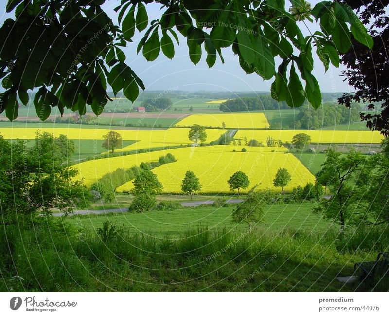 View of Rapeseed Cross Canola Summer June Place of pilgrimage Yellow Sowing Field Vantage point Back Stromberg Westphalia