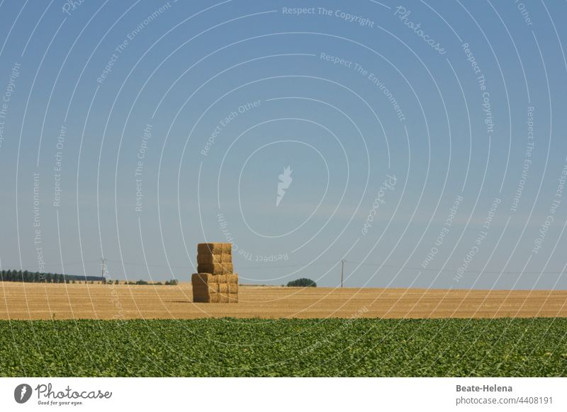 Harvest time: stacked hay on mown field Autumn Field mares Agriculture Landscape Plant Feed Hay Stack Work of art object Tower Meadow acre Nature Grass Straw