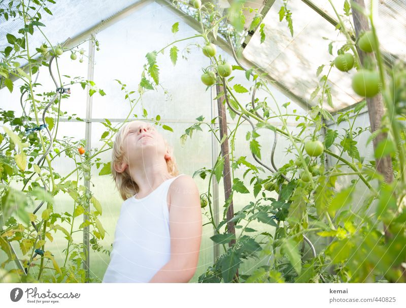 green tomatoes Food Vegetable Nutrition Organic produce Vegetarian diet Slow food Human being Masculine Boy (child) Infancy Head Arm 1 3 - 8 years Child Plant