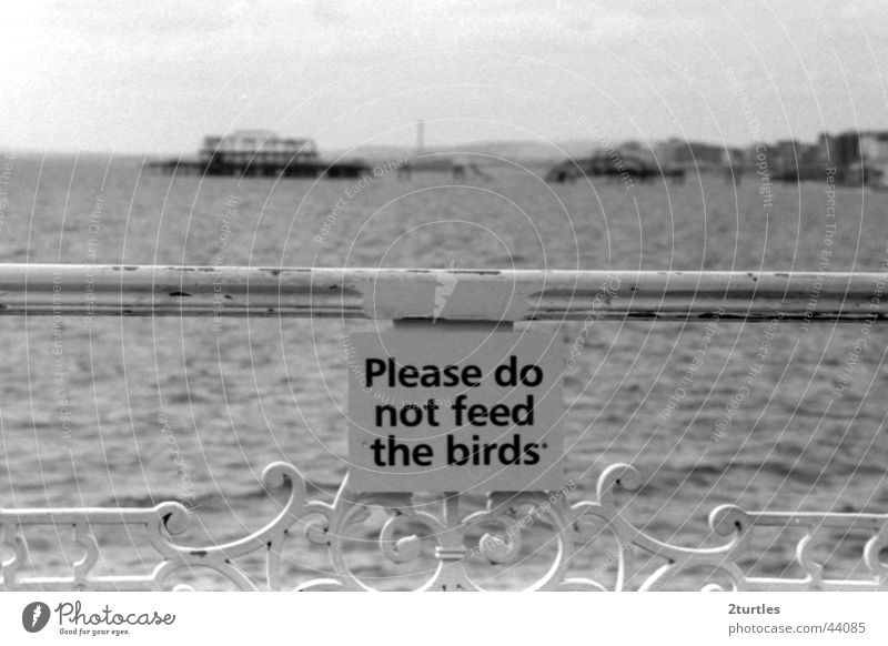 don't feed the birds Jetty Brighton England Great Britain Ocean Health Spa Shed Bridge Signs and labeling Birds are forbidden to feed Warning label Handrail
