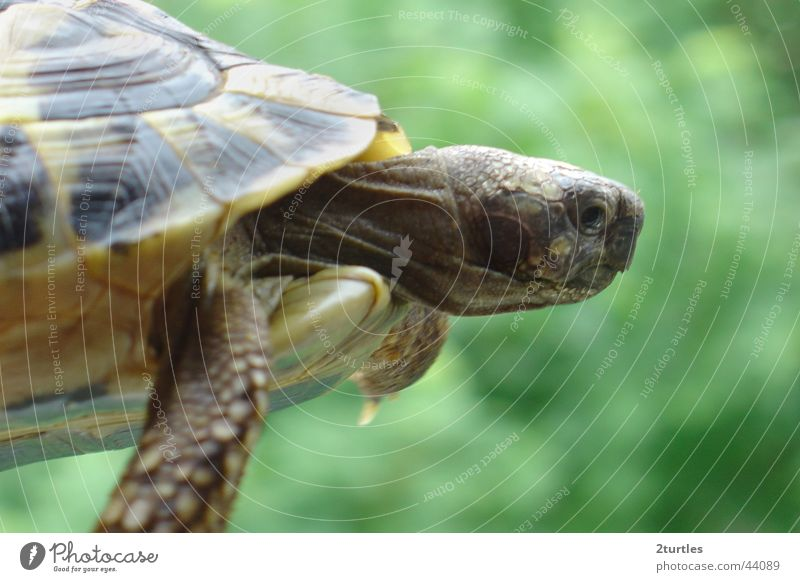 UFO Reptiles Tortoise Turtle Armor-plated Greek tortoise