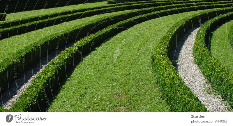 green wave Bushes Park Hedge Maze Garden
