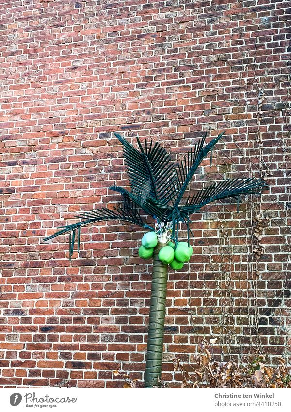 A plastic coconut palm with bright green coconuts is parked in front of an old brick wall Coconut tree Palm tree Artificial Decoration Kitsch Plastic quaint