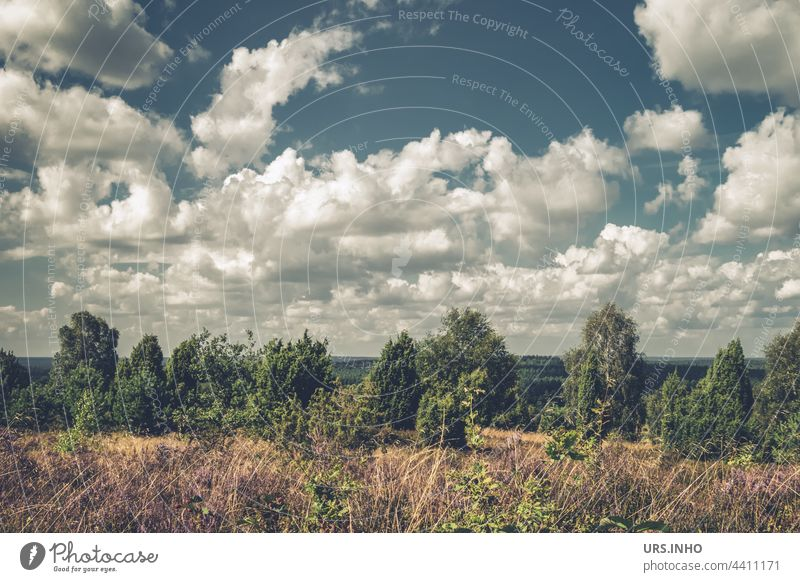 View from Wilseder Berg into the distance with many white clouds in the sky above the idyllic landscape of the Lüneburg Heath Landscape Nature Colour photo