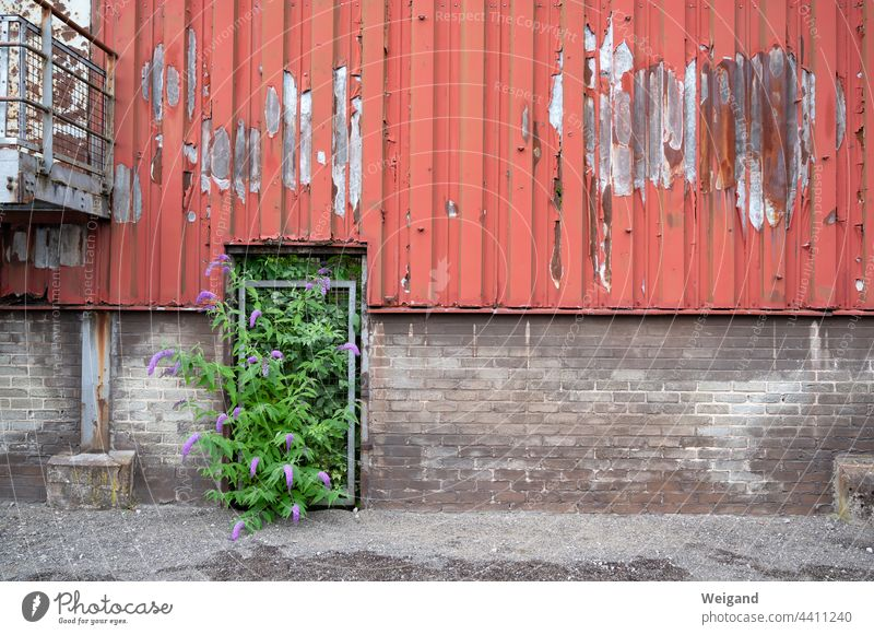 The future is green Green Coalition SPD policy Wall (building) Wall (barrier) Industry Old Future Optimism change Red Gray lostplace