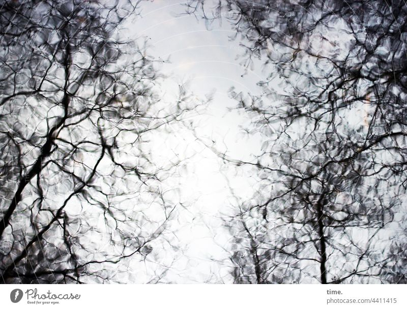 Order in Chaos | Zitterwasser craquelé Tree Water reflection Surface branches Branch trees mystery Fantasy River Painting and drawing (object) Nature