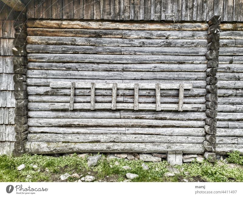 Afraid of heights? No problem. Left or right, that's the question here. Wooden ladder against the hut wall. Ladder Rustic Quaint Hut Insecure Weathered