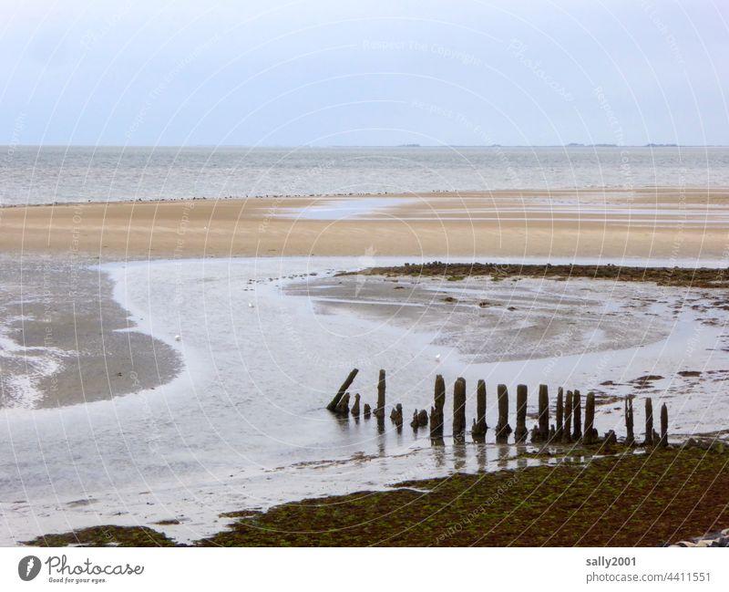 low tide Low tide Tide North Sea Mud flats Amrum Break water Sandbank Ocean Beach coast Horizon Relaxation Far-off places tranquillity Serene Slick Holm