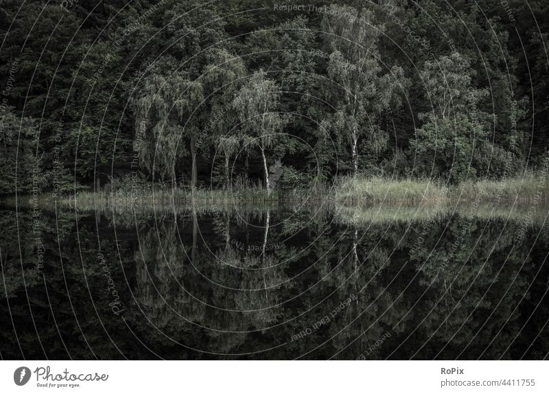 Reflection of a forest edge in a quiet lake. Autumn Lake Forest Edge of the forest autumn bush shrubby wood Nature Habitat nature conservation Environment