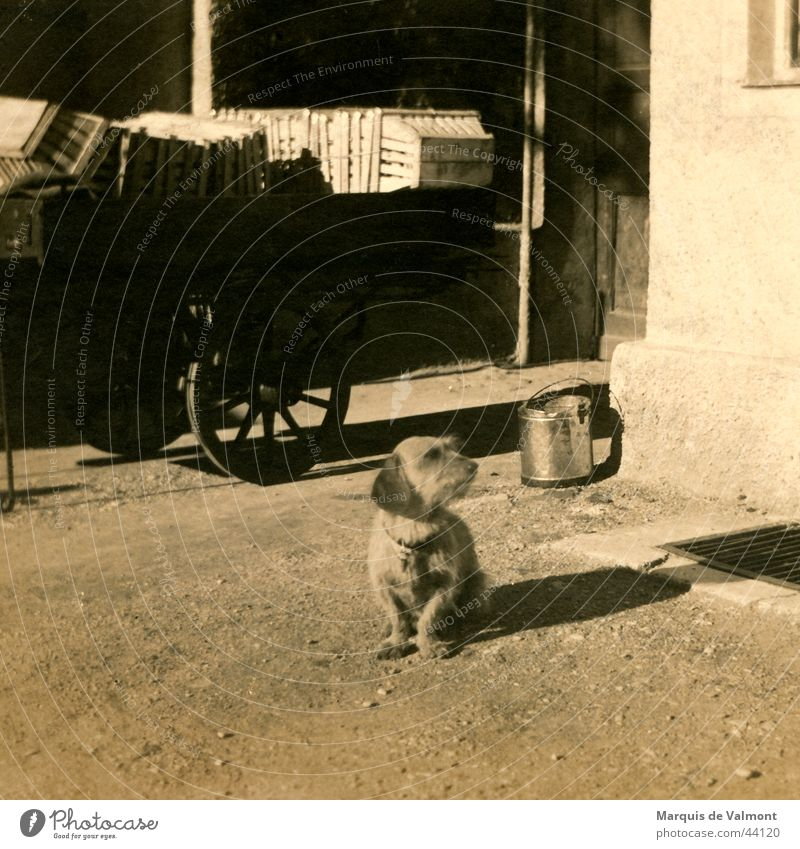 Waldi is waiting at the car... Dog Dachshund Carriage Cart Bucket Basket Crate Black White Historic Basketball basket Street Shadow Sepia Old road shade