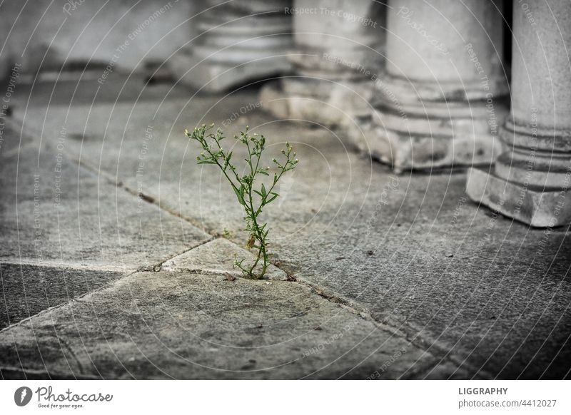 Extreme drought Flower Nature Concrete Colour photo Plant Stone Growth Gray Deserted Dry Wall (barrier) Wall (building) Old Structures and shapes Drought