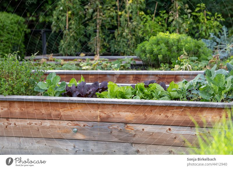 Vegetable and salad raised beds in the garden - organic food from own cultivation Raised vegetable bed salad bed Garden Bed (Horticulture) back-friendly
