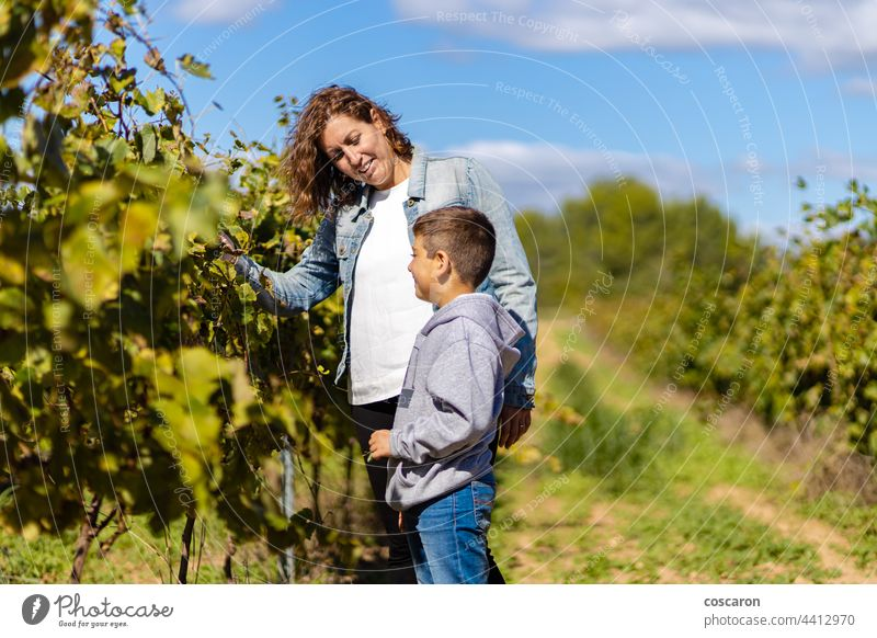 Mother and son looking grapes on a vineyard agriculture autumn backgrounds boy caucasian child childhood children confidence copy countryside europe explore