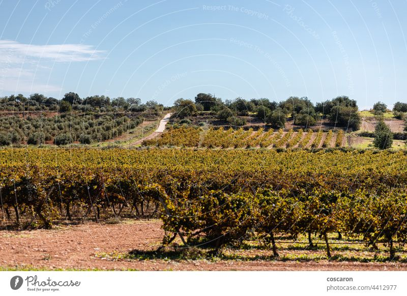 Vineyards on a Priorat, Catalonia, Spain agriculture background blue card catalonia countryside europe farm fruit grape grapes grapevine green